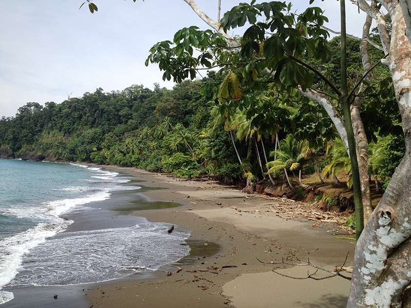 Beach at Corcovado National Park Costa Rica Llama Travel