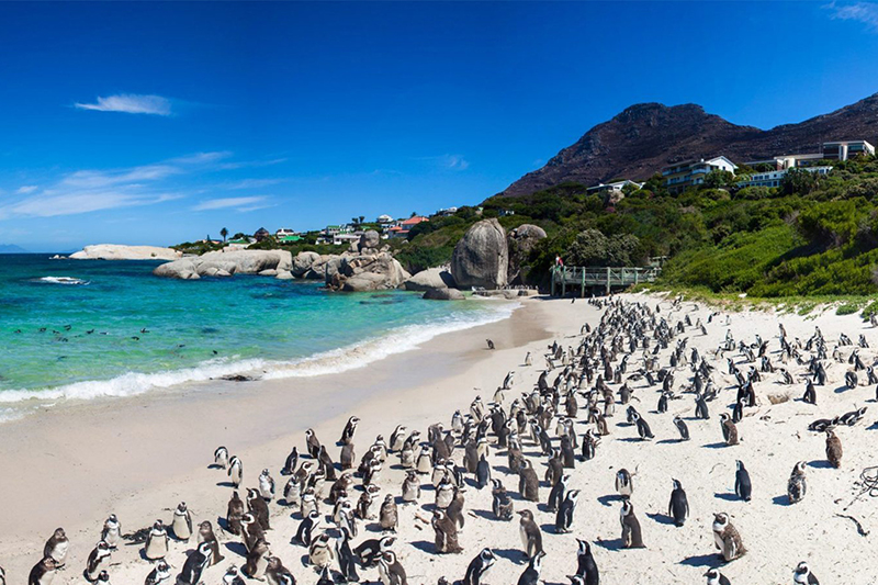 Boulders Beach Cape Town South Africa Llama Travel