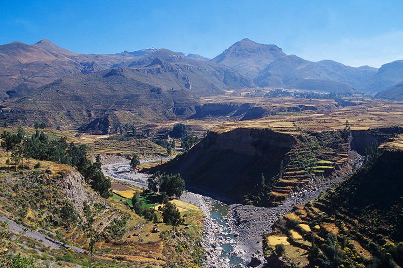 Colca Canyon Peru Llama Travel