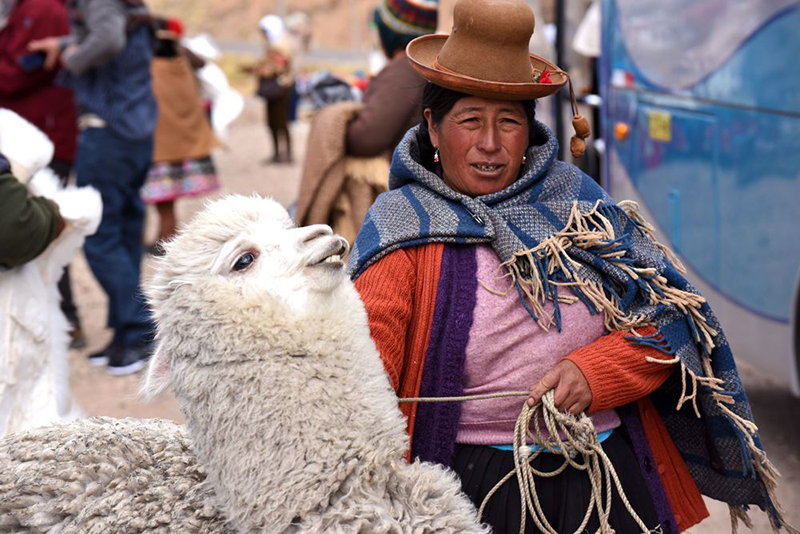 Cusco local with Llama Peru Llama Travel