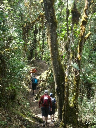 Day 4 Salkantay Trail Peru Llama Travel