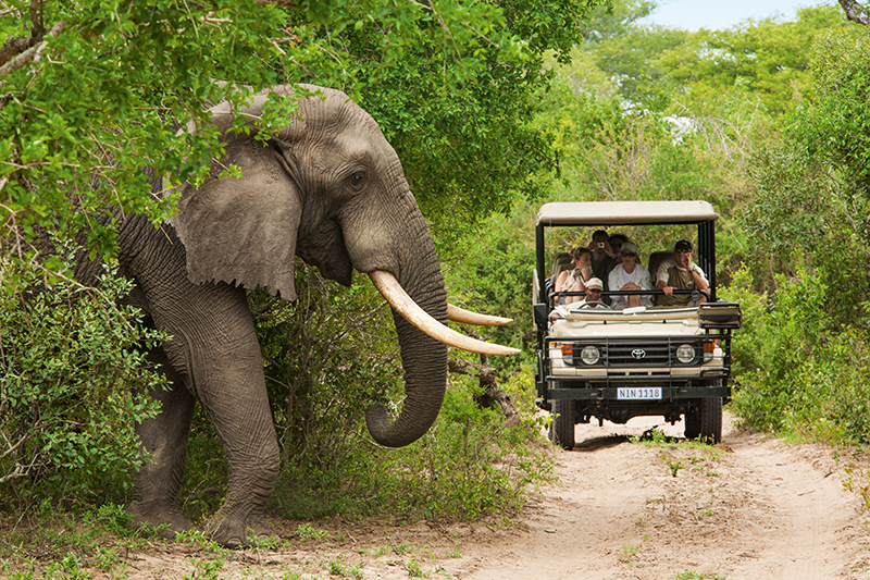 Elephant sighting Kruger National Park South Africa Llama Travel