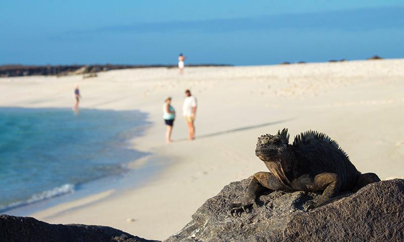 Iguana Galapagos Llama Travel