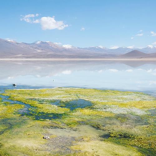Laguna Blanca Bolivia overland 4