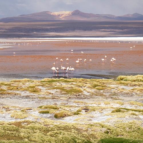 Laguna Colorada Bolivia overland