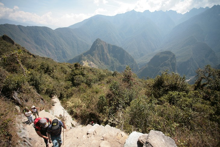 Machu Picchu Mountain Llama Travel