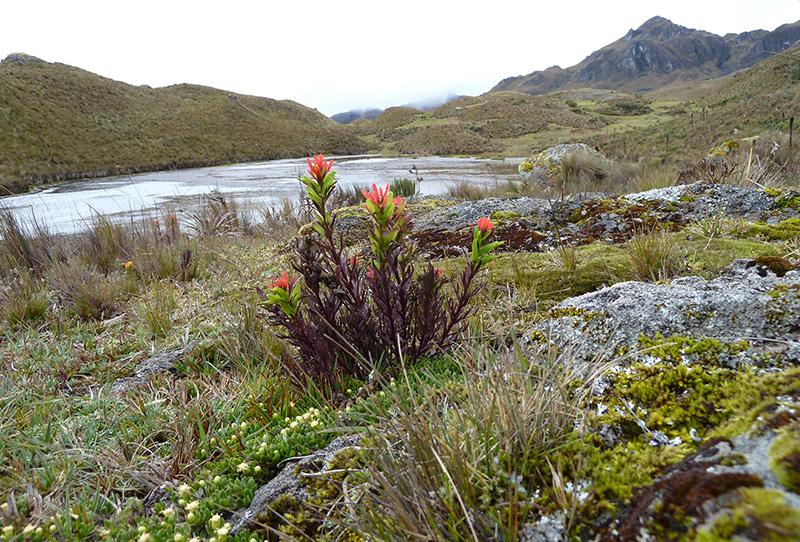 Páramo Cajas National Park Ecuador