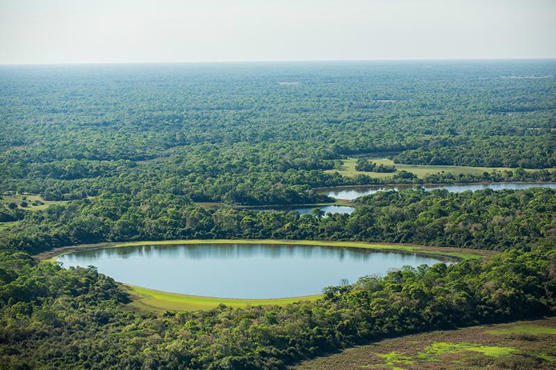 Pantanal Brazil Llama Travel