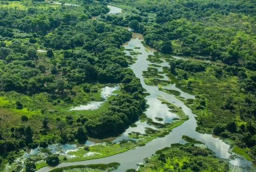 Pantanal Brazil RL