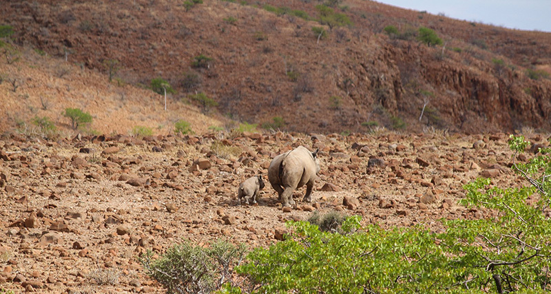 Photo 9 Damaraland rhinos Namibia holidays Llama Travel