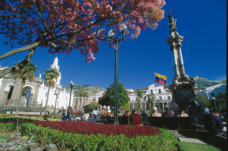 Plaza Grande Quito Ecuador Llama Travel