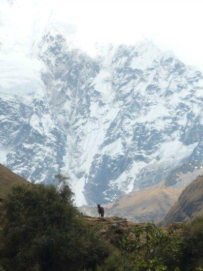 Salkantay Trail Peru Day 1 Walking towards Salkantay Mt Llama Travel