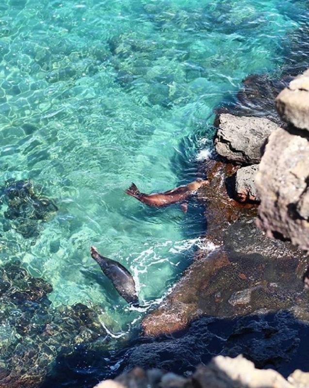 Sea lions Galapagos Llama Travel