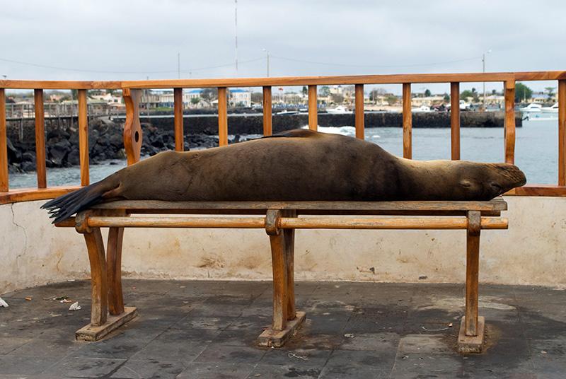 Sleep Sea Lion B Colour