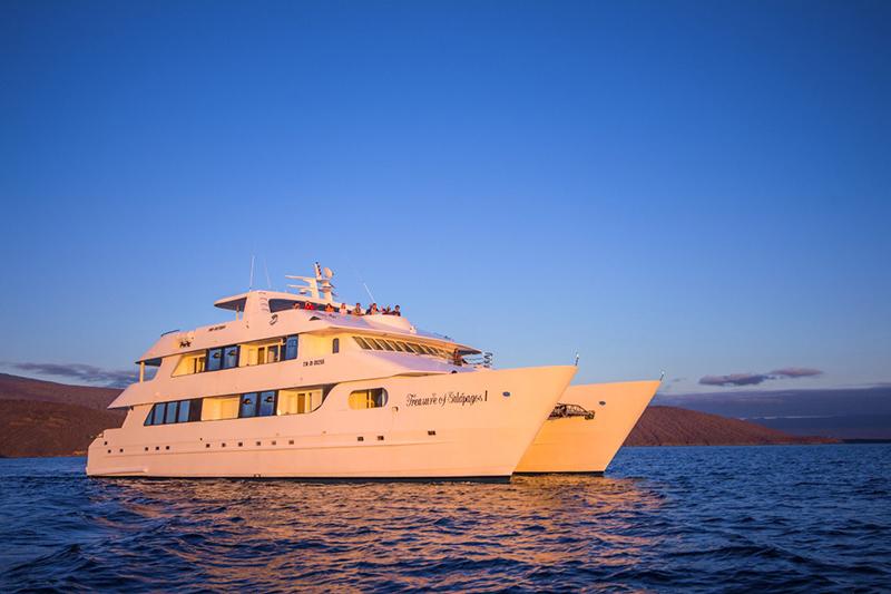 Treasure Galapagos Llama Travel
