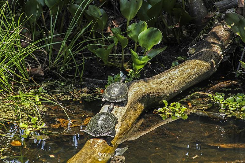 Turtles Amazon Jungle Ecuador Llama Travel