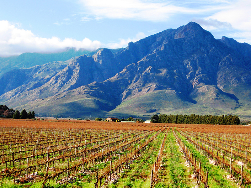Winelands South Africa Llama Travel