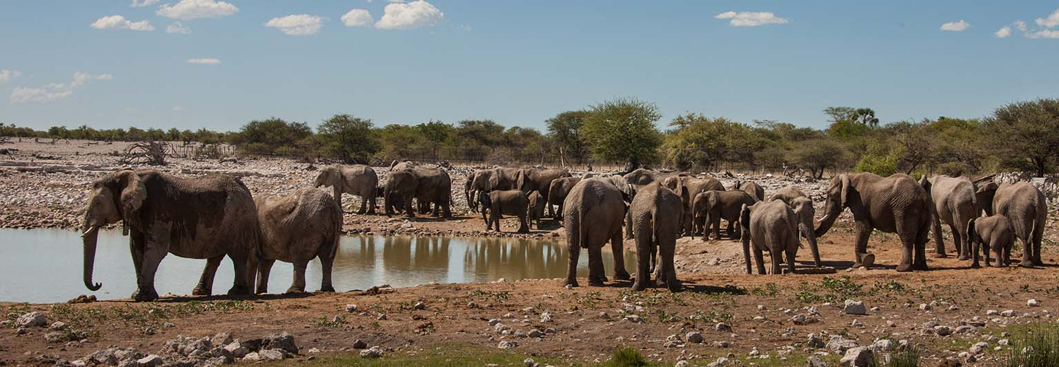 Go on safari in Namibia's Etosha National Park