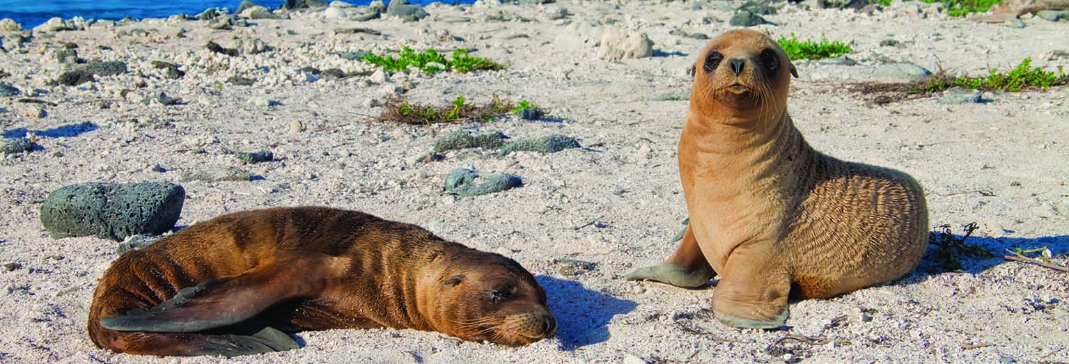 See abundant wildlife in the Galapagos