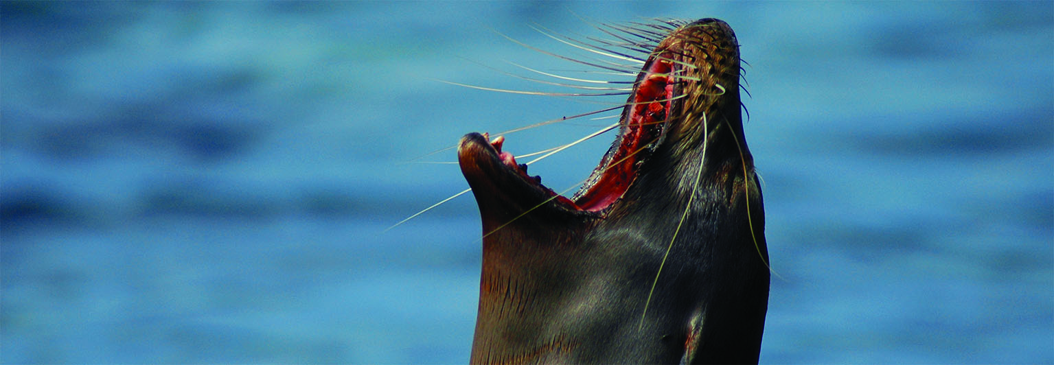 Delight in wonderful Galapagos wildlife