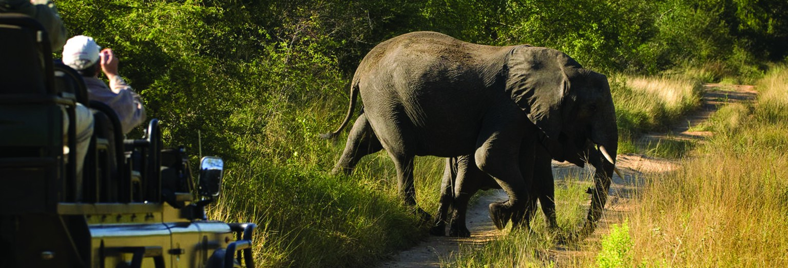 Look for the Big Five in South Africa's Kruger National Park