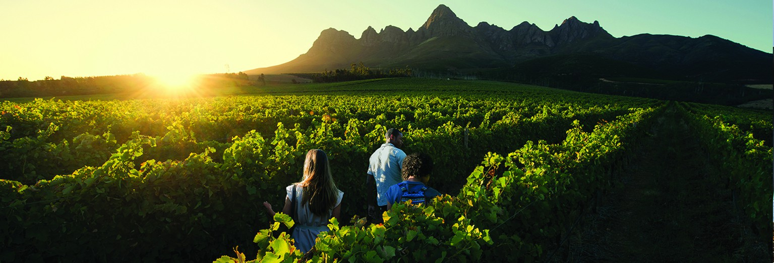 Explore South Africa's famous winelands