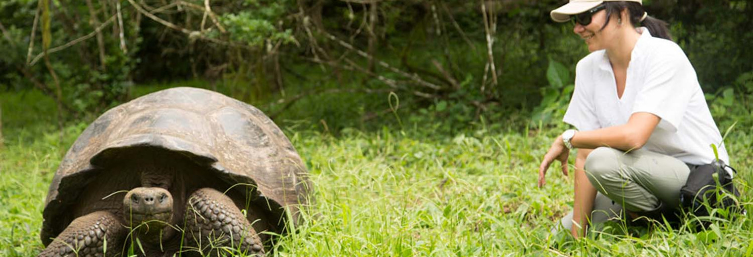 Giant tortoise, Galapagos Islands
