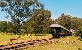 Game viewing, Rovos Rail, South Africa