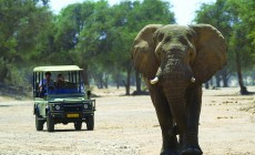 Elephant and vehicle, Etosha, Namibia