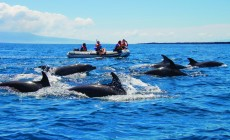 Dolphins, Galapagos Islands