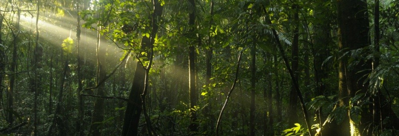 Sunlight on rain forest floor, Ecuador