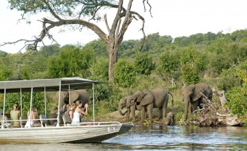Elephants on boat cruise, Chobe National Park, Botswana