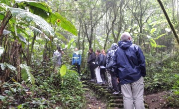 Day & Night Cloud Forest Excursion