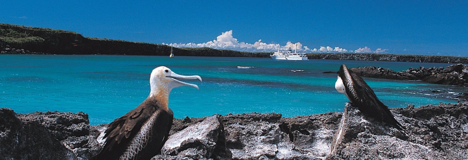 Galapagos Islands Wildlife, Ecuador