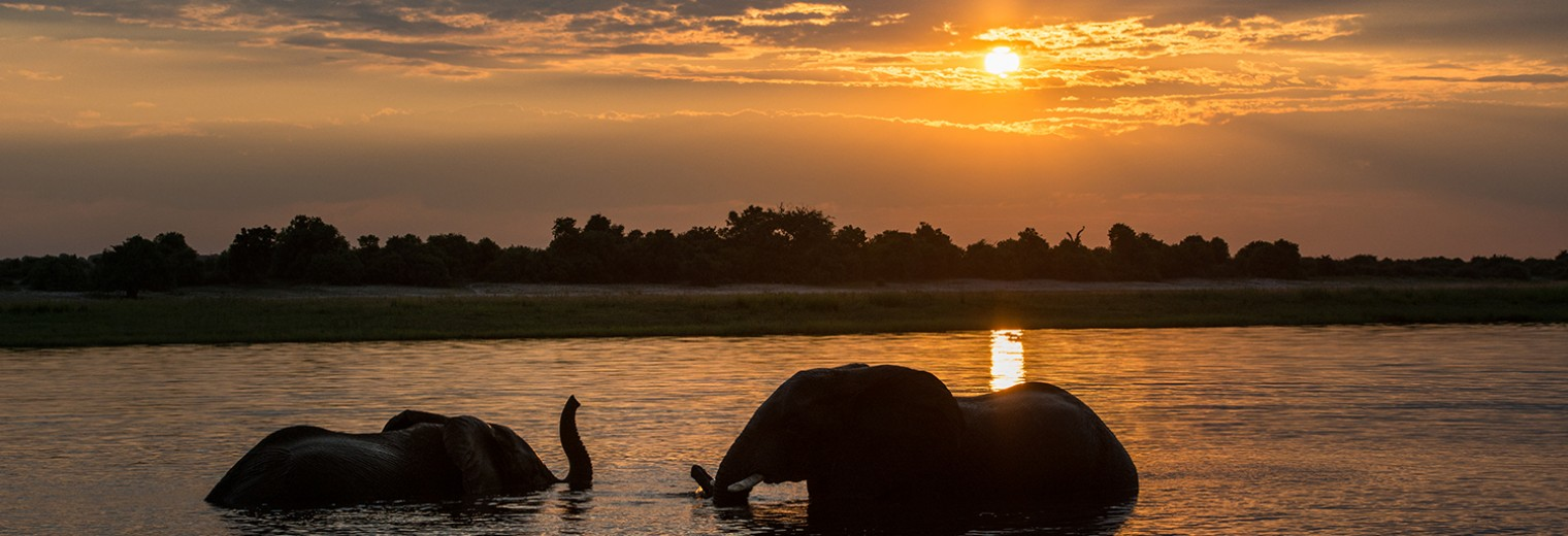 Elephant at sunset, Chobe National Park, Botswana