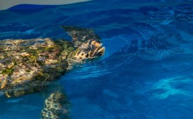 Tamar Turtle Project, Brazil