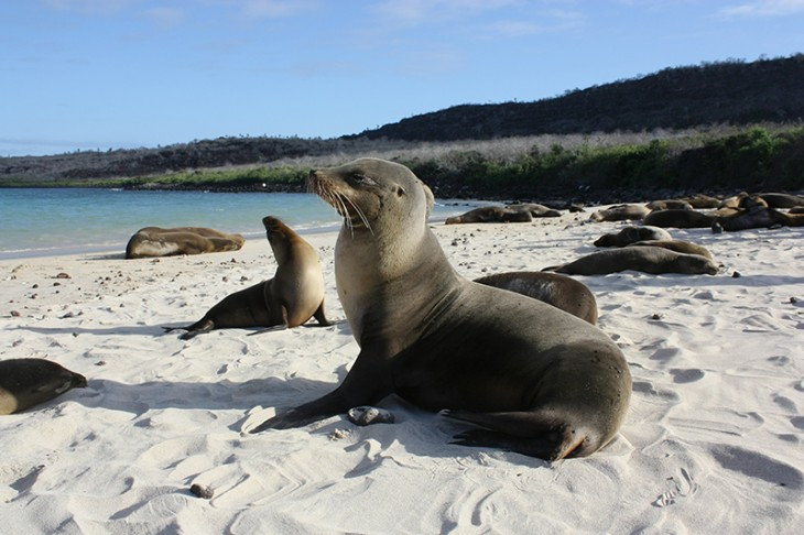 Galapagos Island Stay: A Day Trip to North Seymour Island