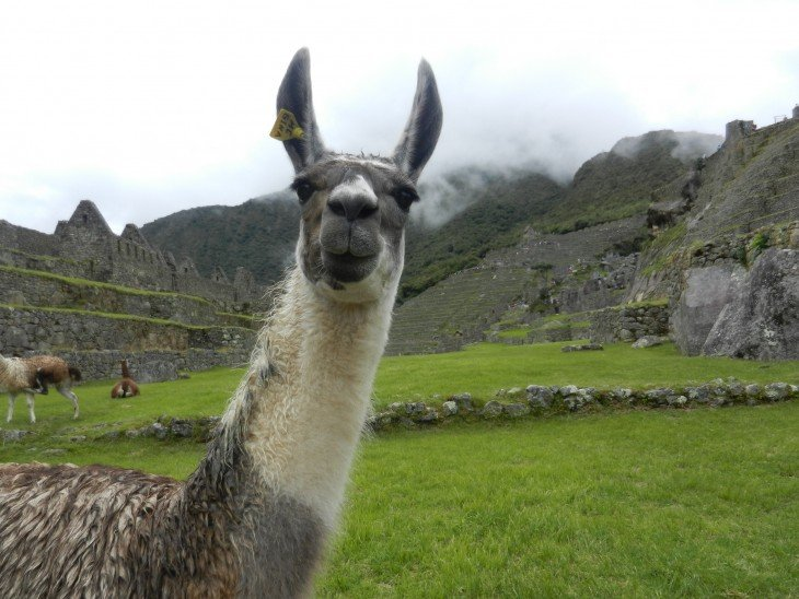 Weird and Wonderful Wildlife of South America
