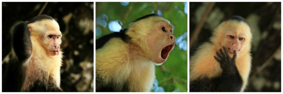 The Many Faces of Costa Rica's Capuchin Monkeys, in Photos.