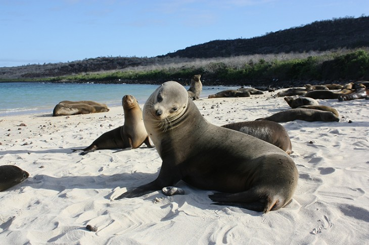 Frequently Asked Questions: What to Pack for the Galapagos