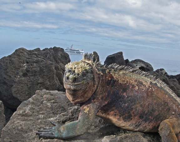My Top 5 Highlights Of The Galapagos