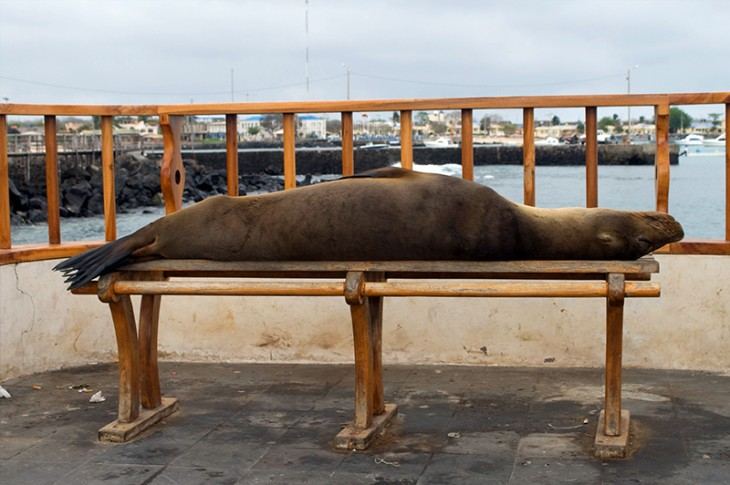 How Much Does it Cost to Visit the Galapagos?
