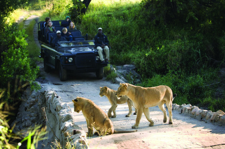 Top 5 Wildlife Experiences In Southern Africa