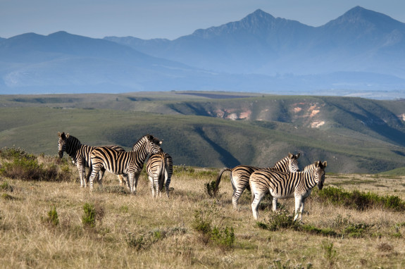 Why Gondwana Was The Highlight Of My South Africa Holiday